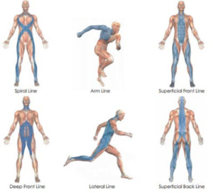 How To Have Healthy Fascia